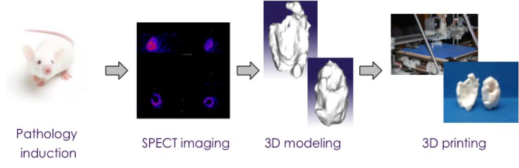 3D printing preclinical imaging Imavita