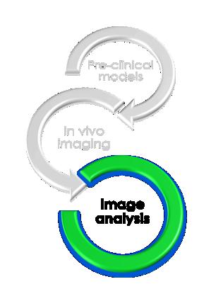 Preclinical image analysis Imavita