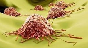 Oncology preclinical efficacy Imavita