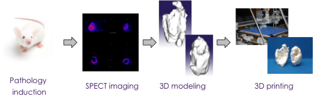 3D printing preclinical imaging Imavita