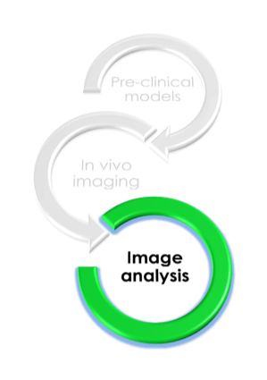 Preclinical image analysis Imavita