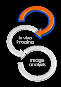 Imavita / Preclinical models