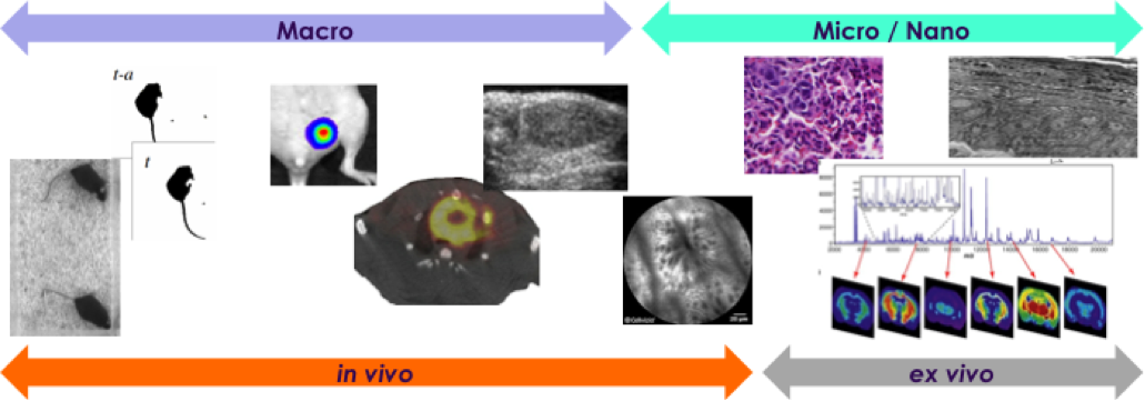 Preclinical imaging Imavita