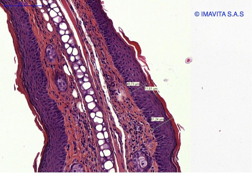 Imavita / Preclinical imaging